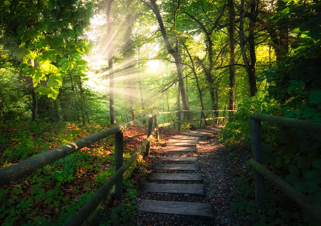 A wooden pathway with railings leads into a green forest where sunlight shines through the branches